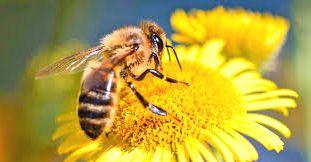 Polinizaci%C3%B3n - Insectos
