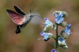 colibri 2 - Insectos