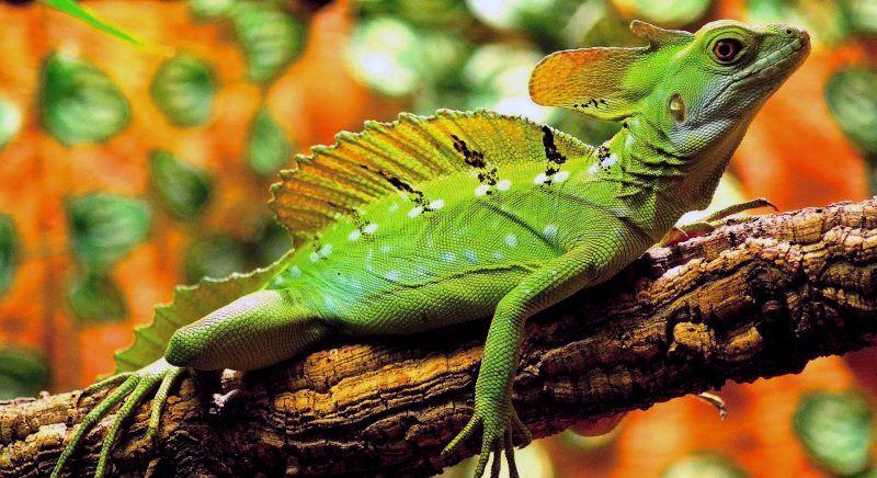 reptiles foto 1 - Reptiles