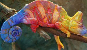 Camaleón portada 300x174 - Animales Exóticos
