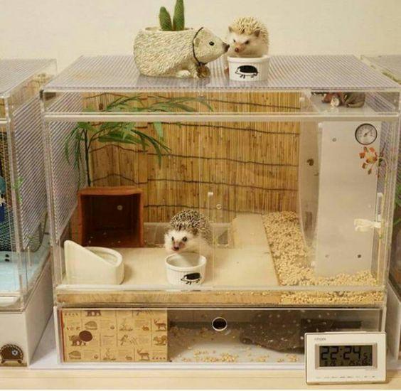 casa de erizo - erizo