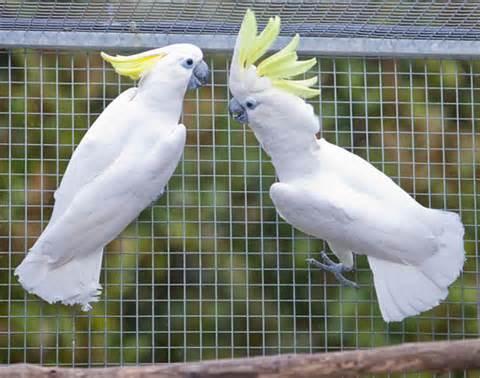 jaulas-para-cacatúas
