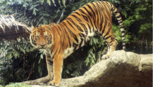 animales terrestres portada 300x171 - Blog animales