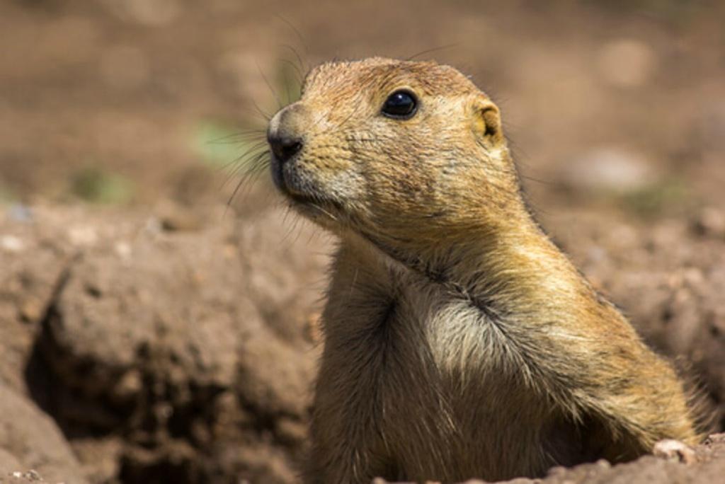 animales exóticos en peligro de extinción en México