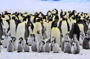 Emperor Penguin 2 650x425 1 300x196 - Animales Exóticos