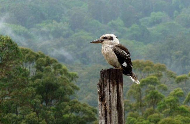 cucaburra-hábitat