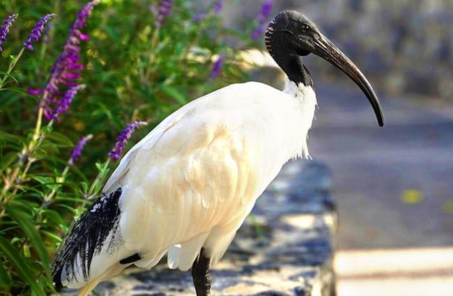 ibis home