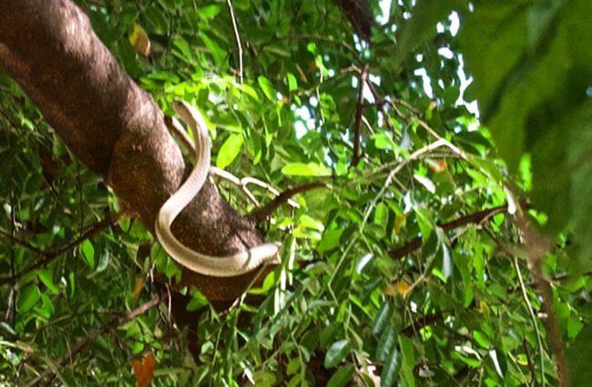 hábitat mamba