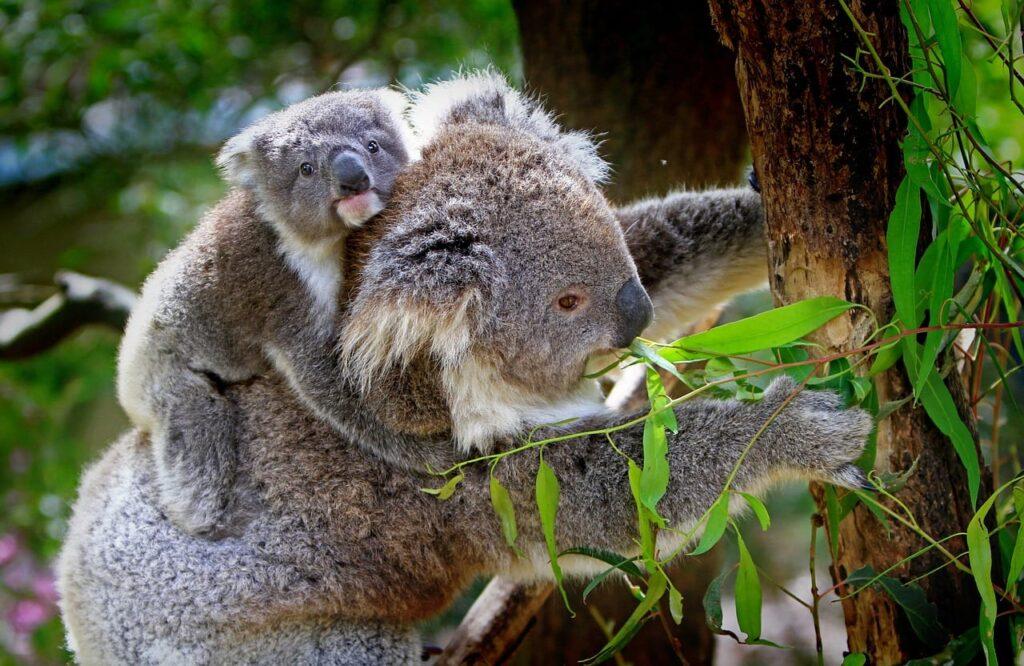 marsupial home