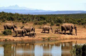 hábitat elefante africano
