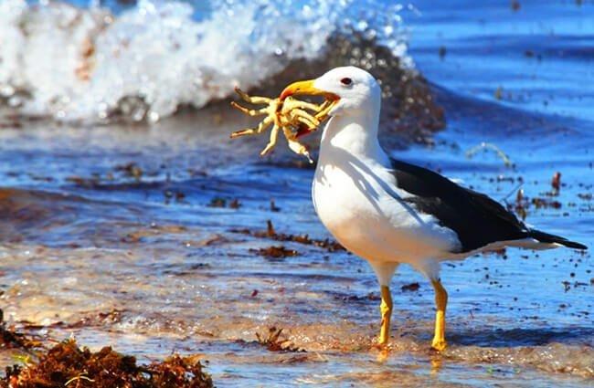 alimentación albatros