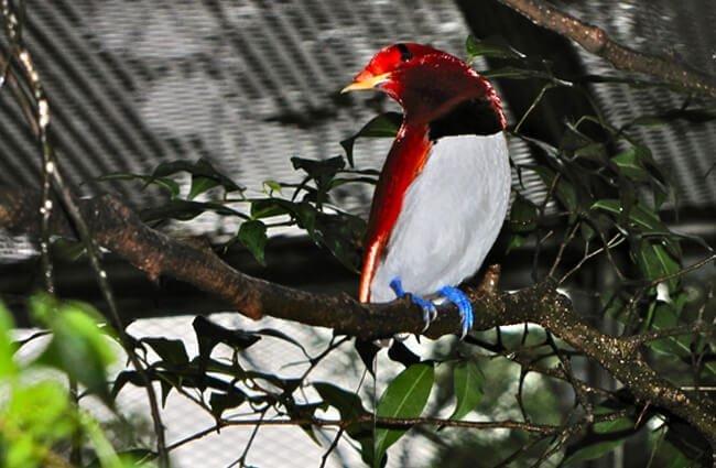 ave del paraíso comportamiento