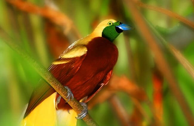 ave del paraíso home